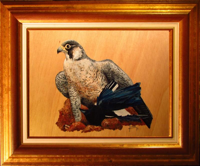 101 Aguila con presa- Marco 25x34 160€